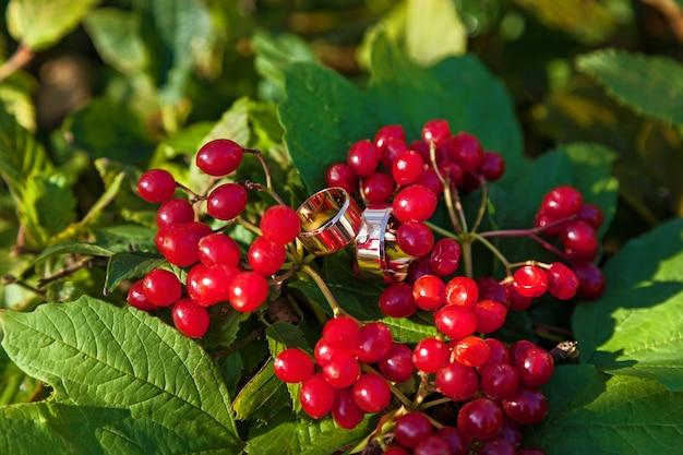 Wedding rings are on red berries. wedding rings on berries.