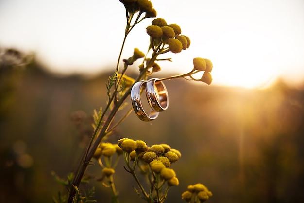 Wedding rings closeup on branch