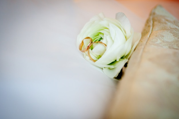 Wedding rings, gold with on a white rose