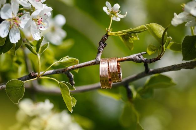 Wedding rings hang on a branch of the blossoming tree