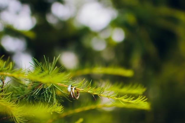 緑の木にぶら下がっている結婚指輪。