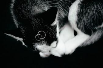 Wedding rings lie on a husky puppy