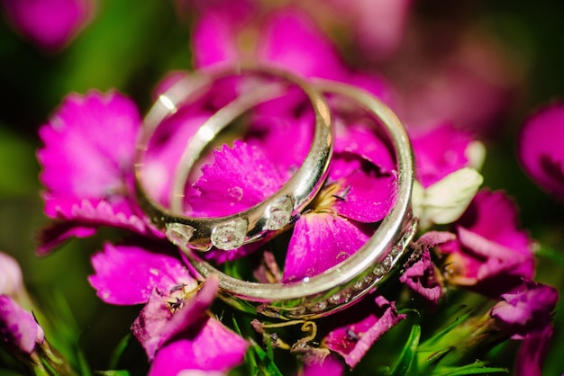 Wedding rings lie on a pink flower close up