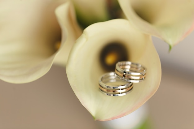 Обручальные кольца на ярком фоне