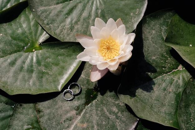 Обручальные кольца на листе белого лотоса