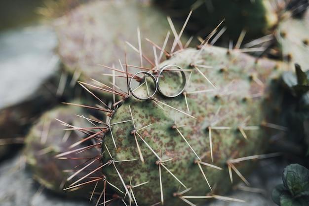 Обручальные кольца на иголках кактуса