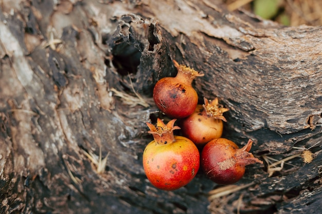 Обручальные кольца на плод граната спелый красный гранат