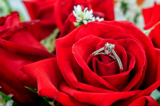 Wedding rings on the red rose flower with over light and soft-focus in the background