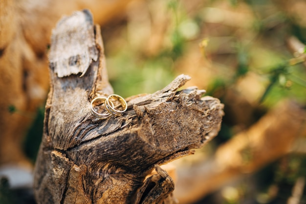 Wedding rings on a tree bark