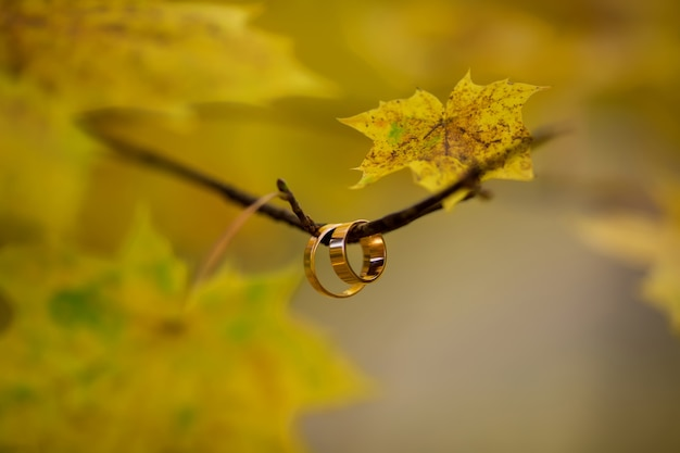 Wedding rings on tree branch in autumn wedding day