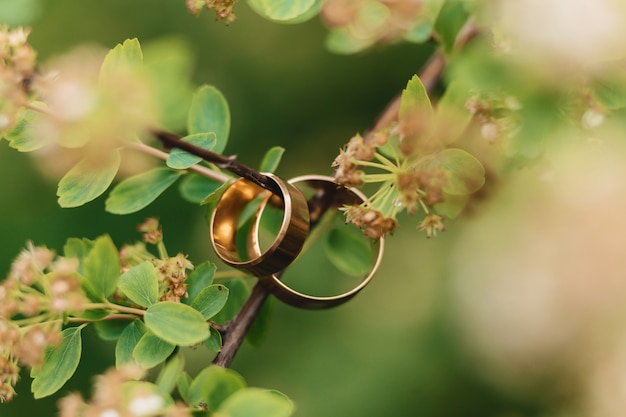 Wedding rings, wedding celebrations and accessories and decorations