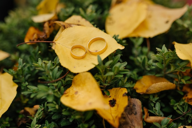 Wedding rings with golden autumn leaves. wedding details.