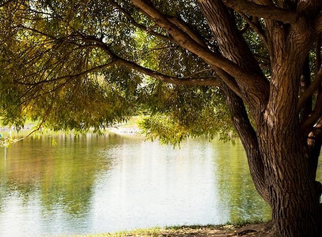호수에서 수양 버드 나무