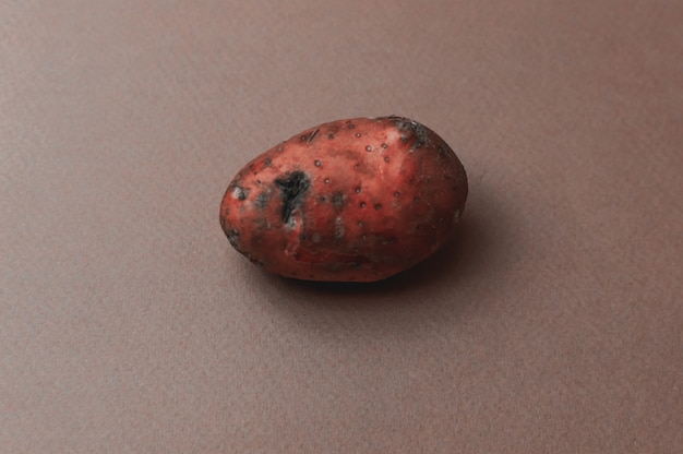 The weird ugly mutant's organic red potato jagged with insect bites