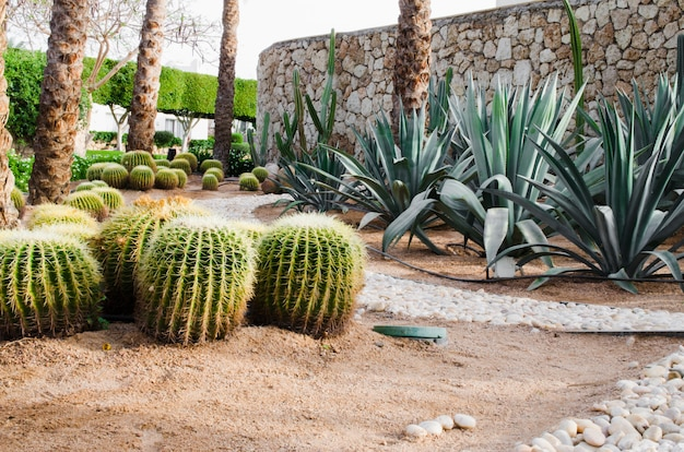 Well-groomed park area with palm trees and cacti.