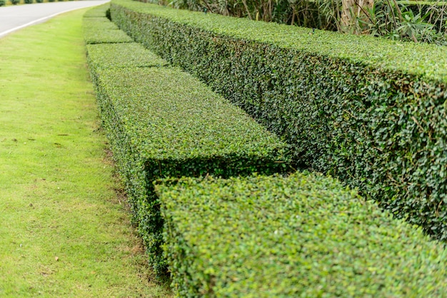 A well landscaped and manicured hedge of bushes