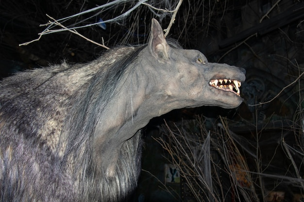 Werewolf's head in profile among darkness and branches, grinning muzzle, in the bestiary museum - saint petersburg, russia, june 2021.