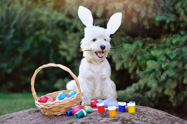 West highland terrier painting easter eggs