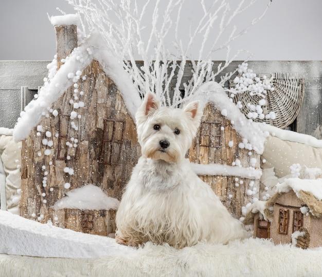 クリスマスの風景の前でウエストハイランドホワイトテリア