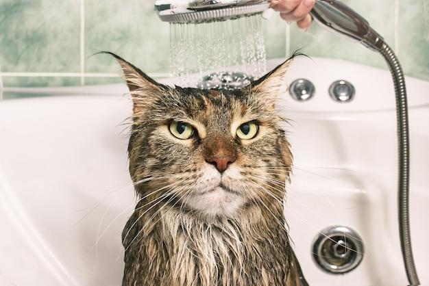 Wet cat. funny cat in the bath