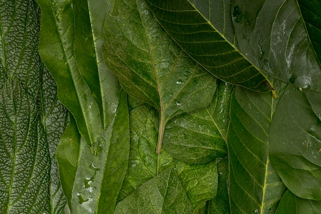 Wet close-up green leaves background