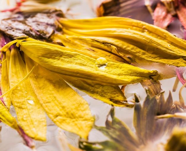 Wet daisies close up