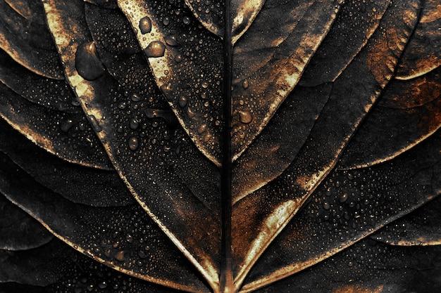 Wet golden alocasia leaf background