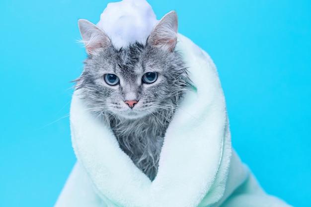 青色の背景に緑のタオルに包まれたお風呂の後のぬれた灰色のぶち子猫