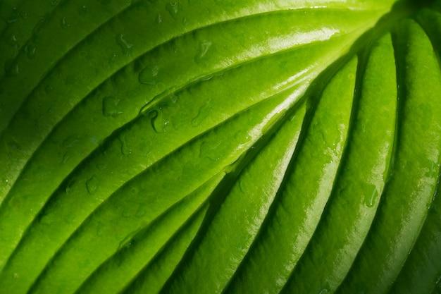 Wet green leaf close up