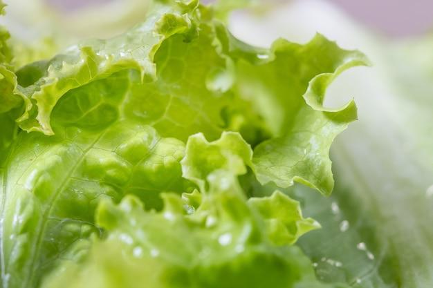 Мокрый зеленый лист салата в макросъемке