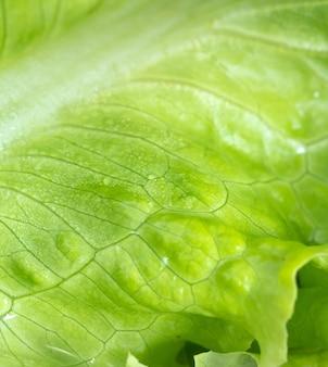 매크로 사진에서 젖은 녹색 잎 상추
