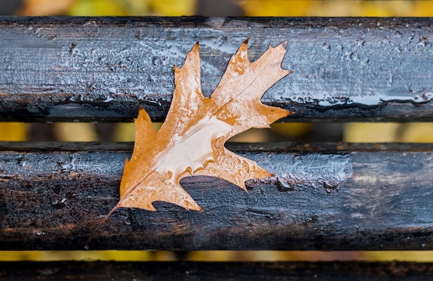A wet leaf of oak red in the fall on bench in a park in rainy weather