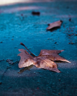 Wet leaf in the street of barcelona