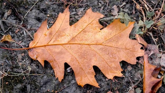 地面に濡れたオークの葉、秋の背景