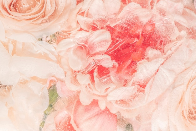 濡れたピンクのバラの花