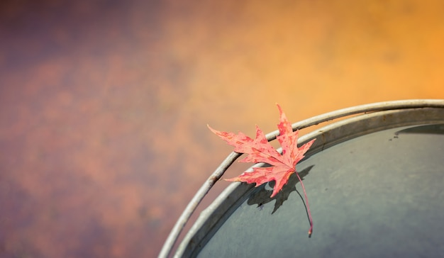 Wet red maple leaf lies on the edge of the tin bucket .