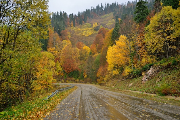 Мокрая дорога в горном осеннем лесу