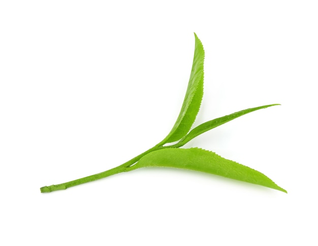 Влажные чайные листья изолированные