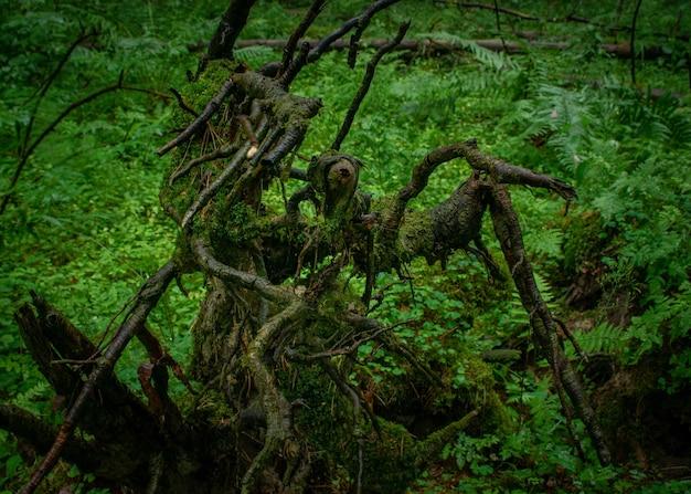 森の中の濡れた木と緑の植物