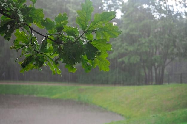 降りしきる雨の中、濡れた木の枝。雨の背景。