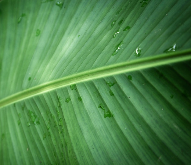 Wet tropical leaf closeup