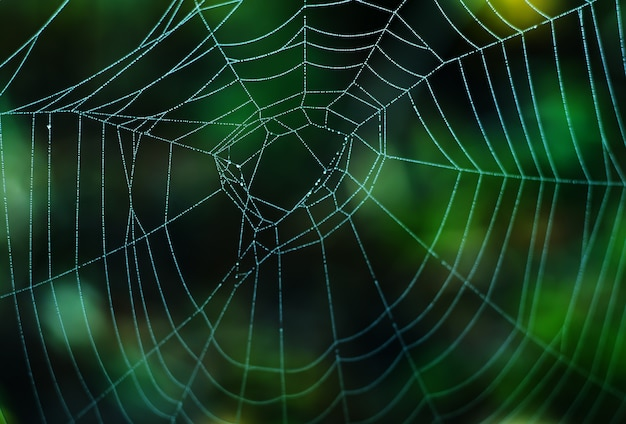 Wet web on a green surface