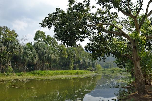 Wetland kametsa pimpoke