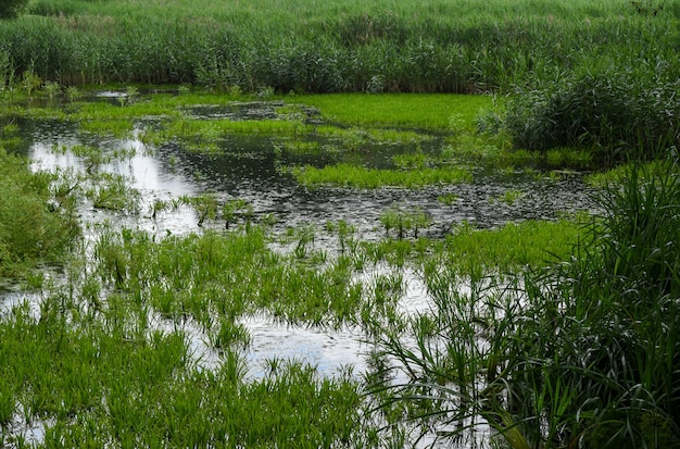 Пейзаж заболоченной местности в лесу в беларуси.