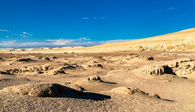 페루 오쿠카제 사막의 고래 화석