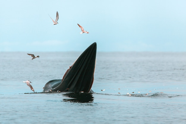 Whale and seagulls at the sea