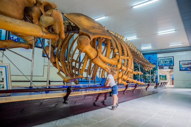 A whale skeleton at the national oceanographic museum