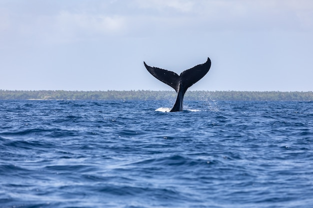 Whale tail fin over the ocean surface