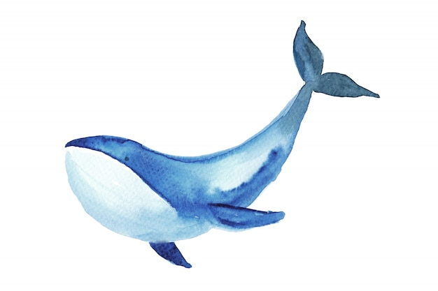 Whale watercolor illustration.