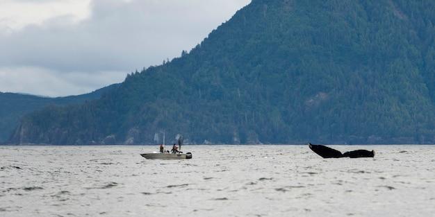 Whale with fishing boat in pacific ocean, skeena-queen charlotte regional district, haida gwaii, gra